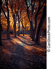Beautiful Fall Season, Beautiful Autumn, Beautiful trees in Autumn Sunny day