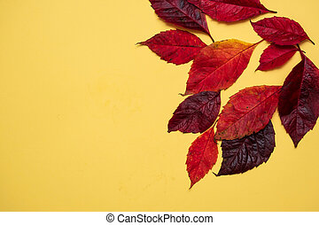 fallen autumn bright red leaves on a yellow background