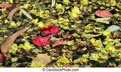 Beautiful fallen flowers and leaves floating on green water