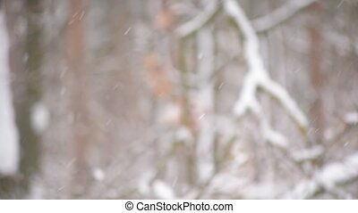 Beautiful falling snow on background of blurred forest
