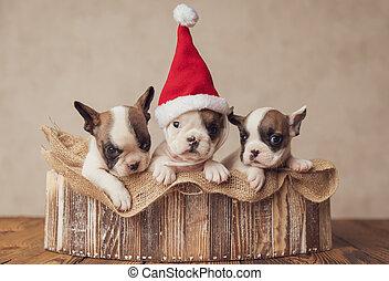 beautiful family formed by three joyful french bulldog puppies posing