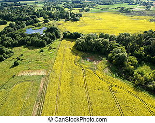 landscape in summer with rapeseed fields and pond, aerial view