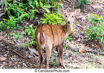 beautiful fawn in the grass and plants. His long ears reminded me of Bambi. Concept animals in the zoo