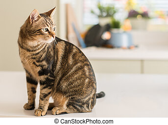 Beautiful feline cat at home. Domestic animal