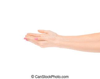 Beautiful female hands isolated on white background.