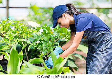 female nursery worker working in greenhouse
