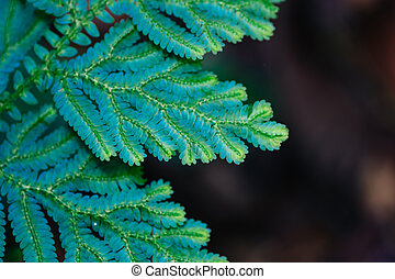 Beautiful ferns leaves green foliage againts shallow depth of field background in nature. selective focus shot