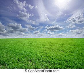 Beautiful field background