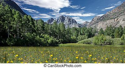 Field of Flowers in the Eastern Sierras
