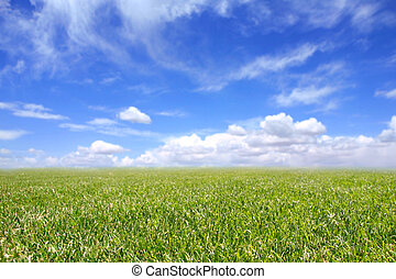 Beautiful Field of Green Grass and Blue Cloudy Sky