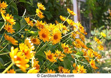 yellow orange flowers