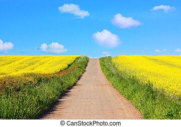 Beautiful fields of rape in Springtime - Beautiful fields of...