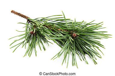 Beautiful fir-tree branch. - Beautiful fir-tree branch ...