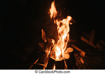 Beautiful fire in the forest on a black background.