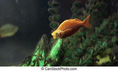 beautiful fish in an aquarium