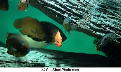 Beautiful fish oceanarium. Ddeep underwater world.