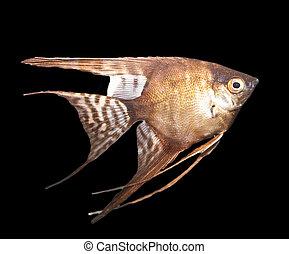 beautiful fish on black background