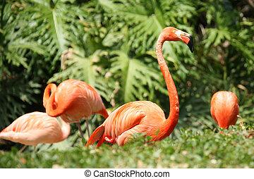 Beautiful Flamingo on Lush Green Background Foilage