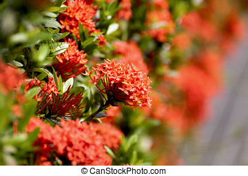 beautiful flora - beautiful colorful flowers bloom in garden...