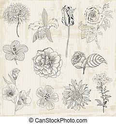 Beautiful Floral Elements - hand drawn Retro Flowers, Leaves - in vector