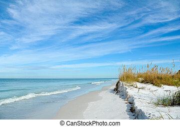 Beautiful Sand Dunes and Sea Oats on the Coastline of Anna Maria Island, Florida
