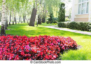 Beautiful flower-bed
