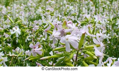 Beautiful flower bed. Flower clearing. Spring bed with beautiful white daffodils