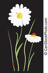 beautiful flower daisy on background