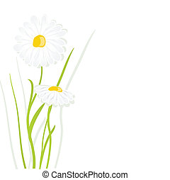 beautiful flower daisy on background