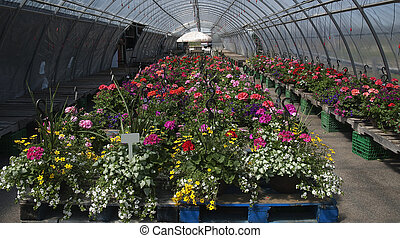 flower display in the greenhouse