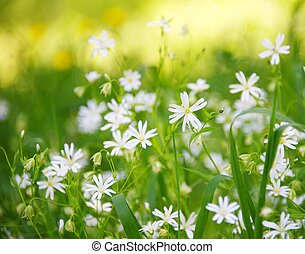 Beautiful flower field