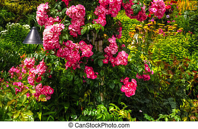 Beautiful flower garden in HDR