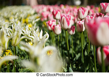 Beautiful flower garden with colorful blooming flowers