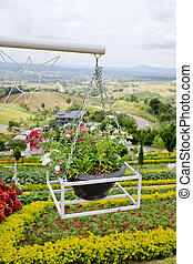 beautiful flower hanging basket