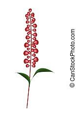 Scarlet Sage Flowers or Salvia Splendens Flower - Beautiful ...