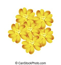 Yellow Yarrow Flowers or Achillea Millefolium Flowers - ...