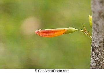 beautiful flower in garden