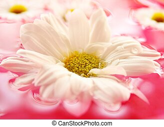 Beautiful  flower in nature background