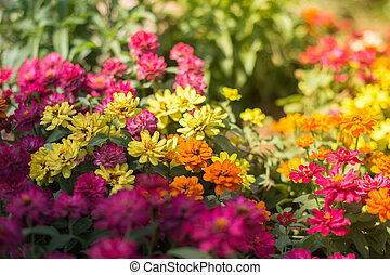 Beautiful flower in the garden closeup