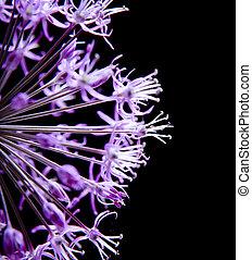 Beautiful flower isolated on black background.