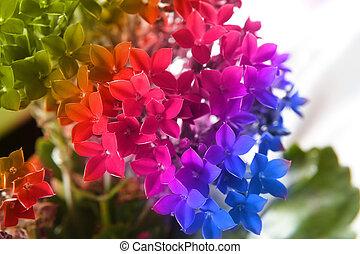 Beautiful flower of kalanchoe macro. Gradient