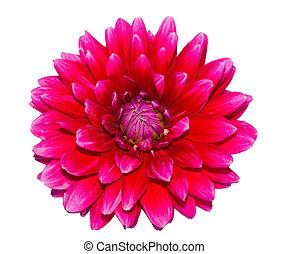 Beautiful flower on white background