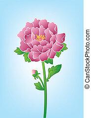 beautiful flower-peony