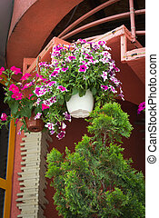 Beautiful flower pot with flowering flower framing house entrance