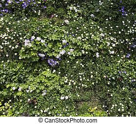 Beautiful flower wall background