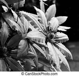 Beautiful flowers. Black and white closeup photos