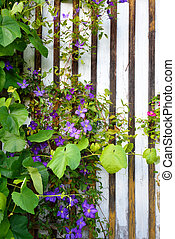 Beautiful flowers blooming and growing in front of a brown and white house wall