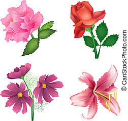 Beautiful flowers for design - roses, lily and cosmos