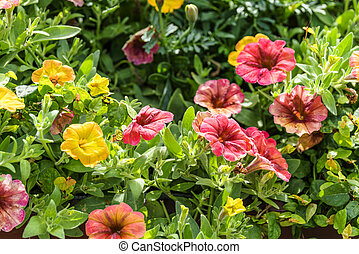Beautiful flowers in a garden at summertime