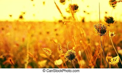 Beautiful flowers in field on sunrise background. Sunny outdoor bright morning.